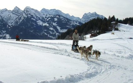 DOG SLEDDING IN SWITZERLAND chiens424x265_12