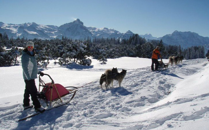 DOG SLEDDING IN SWITZERLAND chiens424x265_13