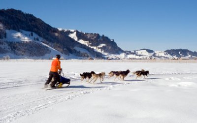 DOG SLEDDING IN SWITZERLAND chiens424x265_14