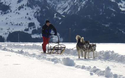 DOG SLEDDING IN SWITZERLAND chiens424x265_4