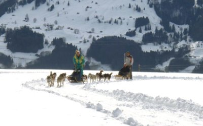 DOG SLEDDING IN SWITZERLAND chiens424x265_6