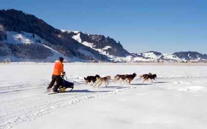 CHIENS DE TRAÎNEAU EN SUISSE chiens424x265_14