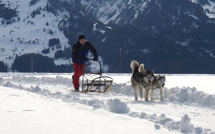 HUSKYTOUR IN DER SCHWEIZ chiens424x265_4