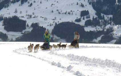 CHIENS DE TRAÎNEAU EN SUISSE chiens424x265_6
